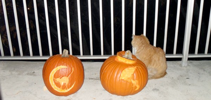 Top -pumpkincat