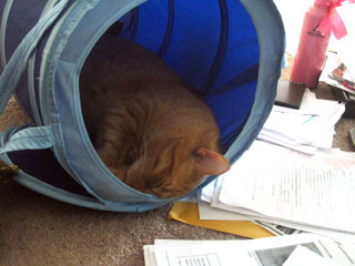 Cat -in -tunnel