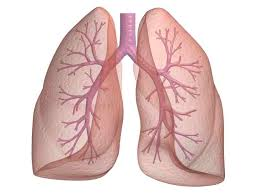 2014-10-02_lung2