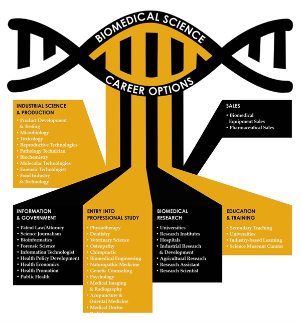 Biomedical science careers infographic