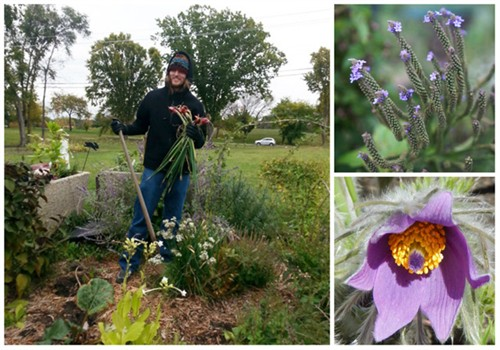 collage of student harvesting garden and flowers