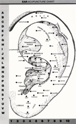 acupuncture points in the ear diagram